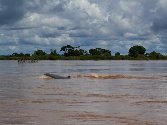 kratie-dauphins