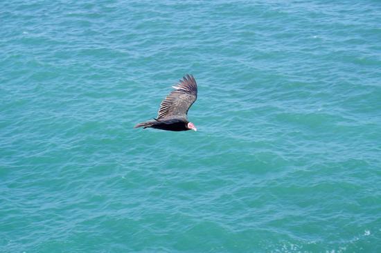 reserva-paracas