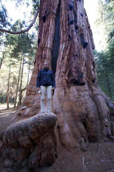 sequoia-national-forest